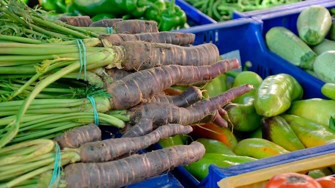 Zanahoria Negra O Morada Safarnaria O Pastenaga Negra Mallorcactual Com La zanahoria es excelente para la piel, el cabello, las. zanahoria negra o morada safarnaria o
